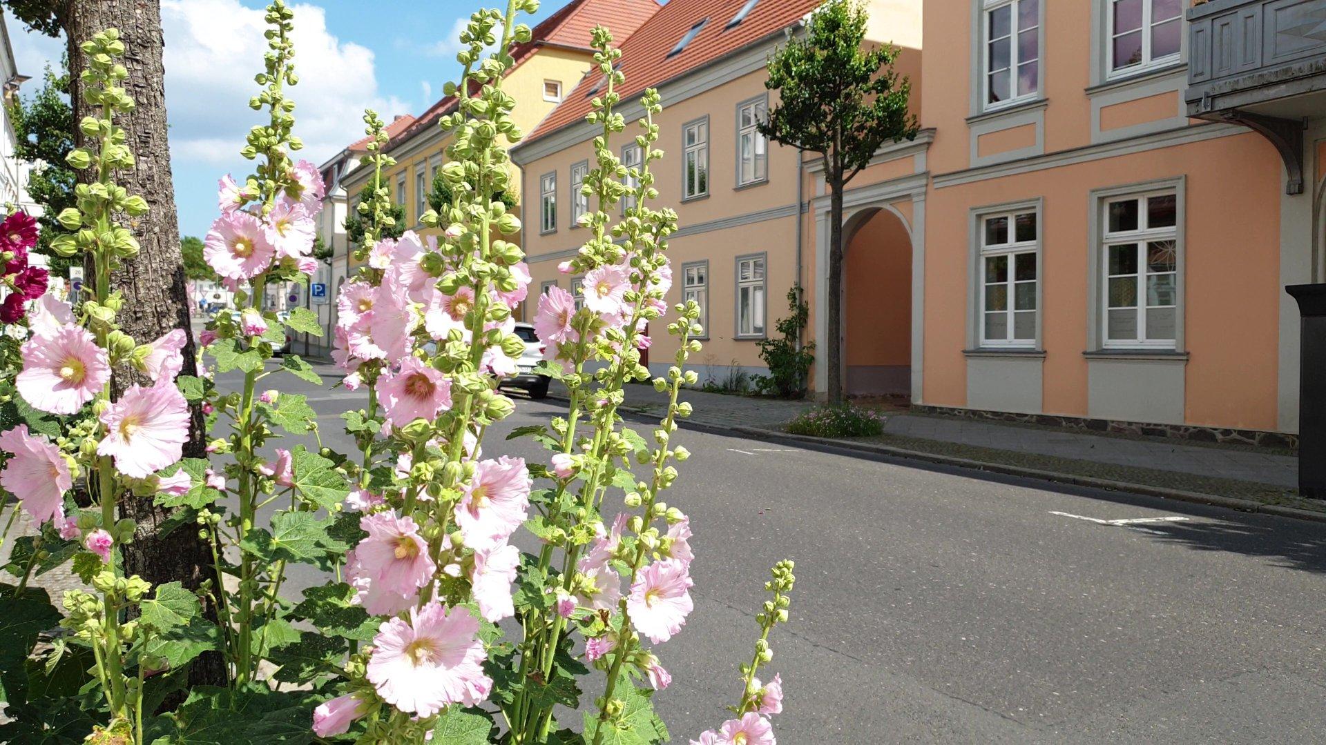 Neustrelitz Seestraße Blumen